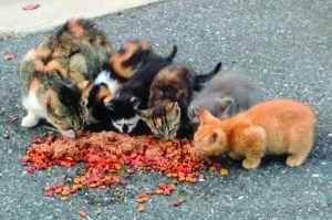 Be a Friend of Feral Felines this Holiday