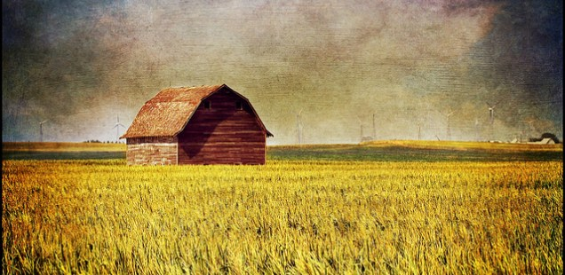 Martin Barker's 500 words | GMO foods, the common sense debate…