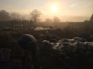 November morning at my allotment