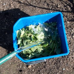 top up with water until covered