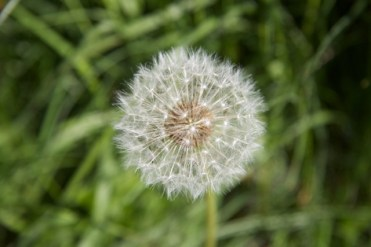 don't add seeds to the potion!