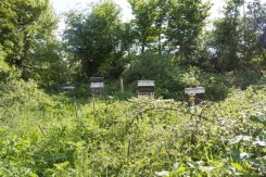 Terry keeps his bees in this secret wild place