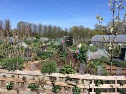 Riverside Community Gardens