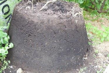 Year old compost