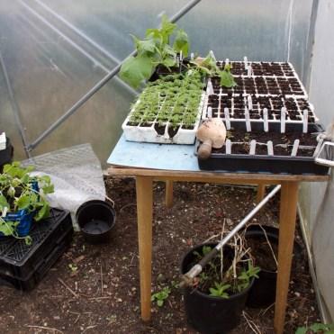 module trays of plants