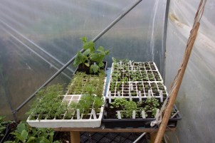 module trays of plants