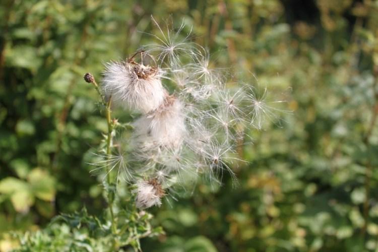 weeds sept 2010