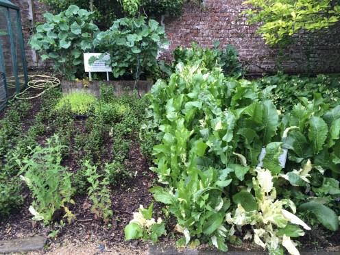 Perennial kale, mint, horseradish and comfrey under an apple tree