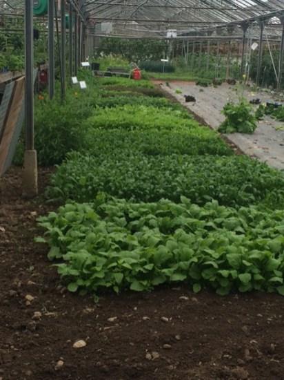 Leaf crops