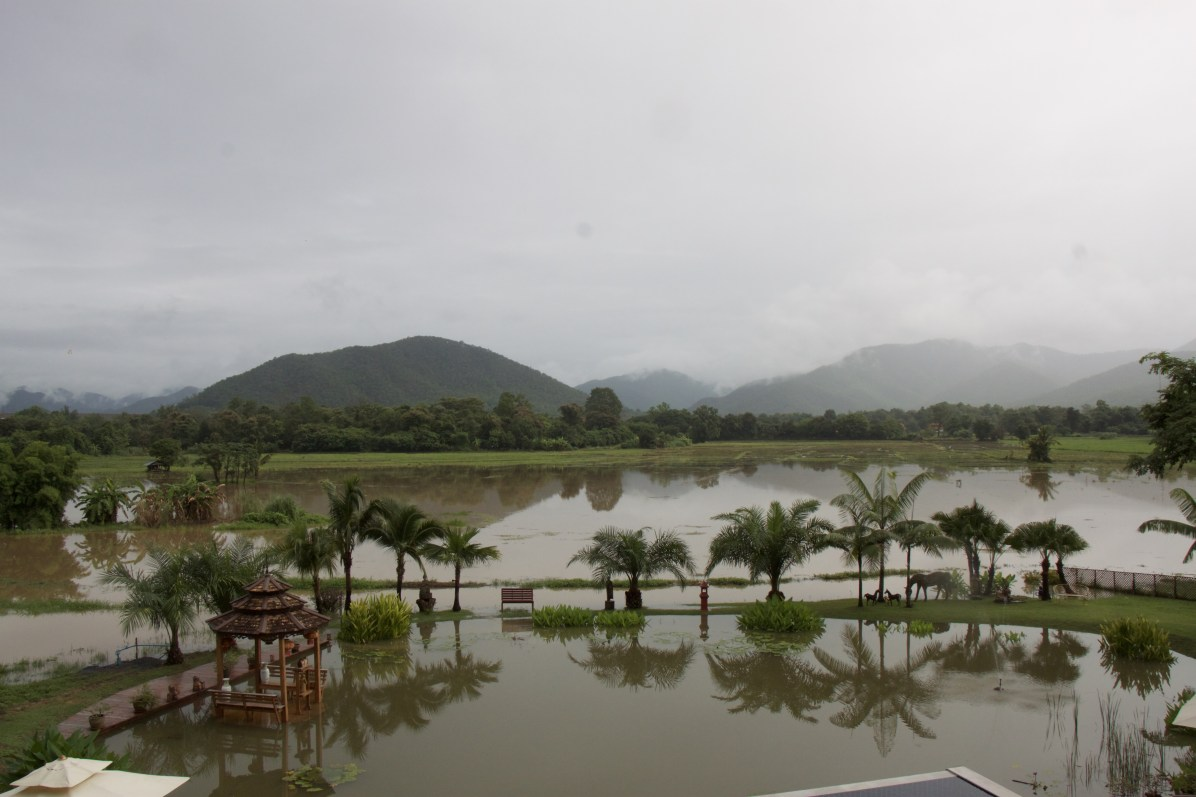 The pond becomes part of the rice fields