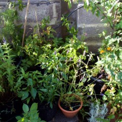 I want to make use of the wall and fence to grow edible climbers, so the planting at the back of the area will need to be 'permanent' potted plants