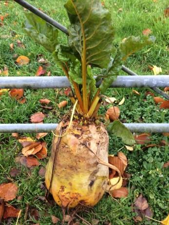 Harvested, 20th November