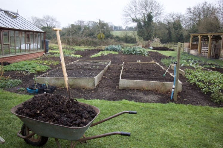 Compost in the wheelbarrow. The dig/no dig experiment beds are in the background