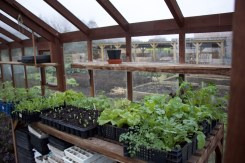 salad in mushroom crates to demonstrate how much can be grown in a small space