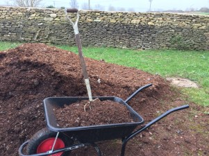 filling the wheelbarrow