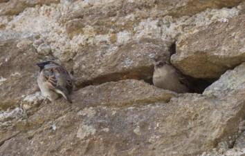 a pair making their home
