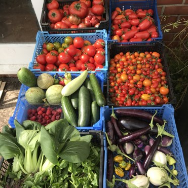some of the day's harvests