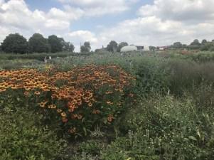 Piet Oudolf garden, H&W