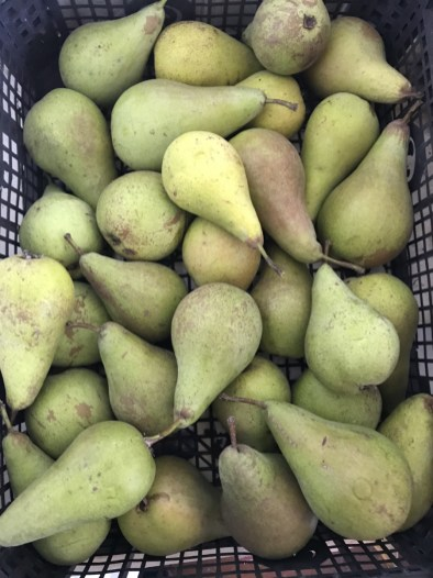 one crate of pears