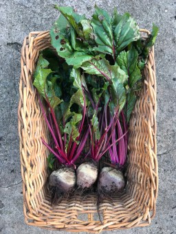 Beetroot from the front garden