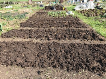 most of the beds are mulched now