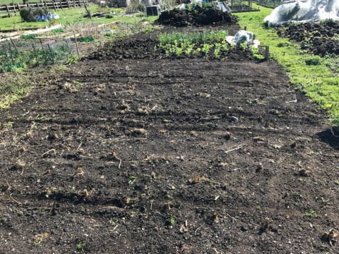 allotment before mulching, 2 beds done a few weeks previously