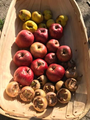 quince, medlars and crab apples
