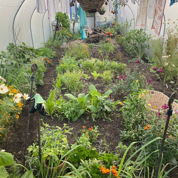 polytunnel gradually changing from summer plants to winter