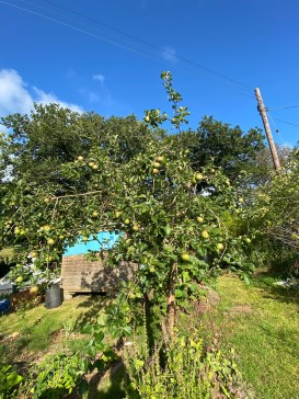 one of the apple trees