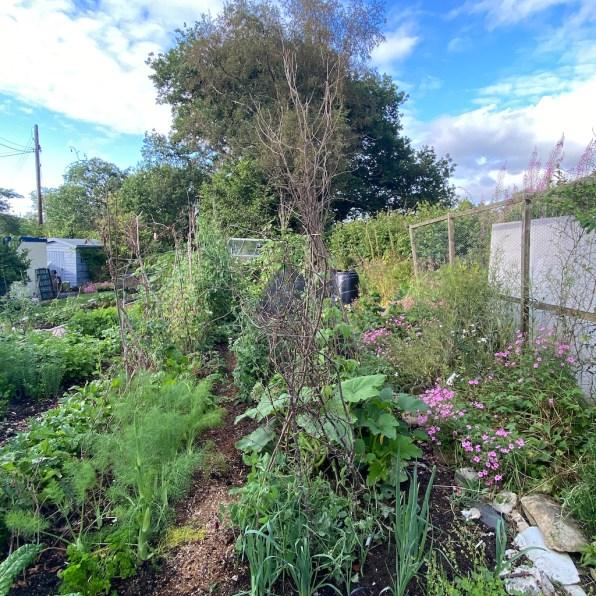 Back garden, 31st July
