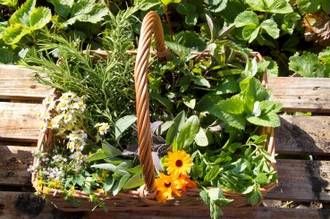 gathering herbs and flowers for potions