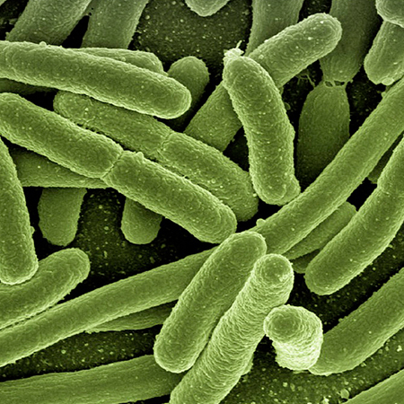 Unidad de Aprendizaje Microbiología y parasitología