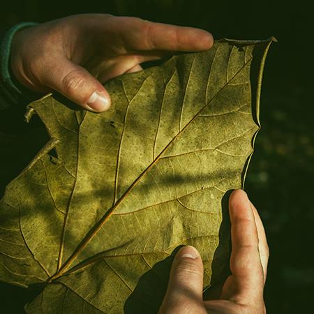 Curso Comprendiendo el medio ambiente: estilos de pensamiento y modelos