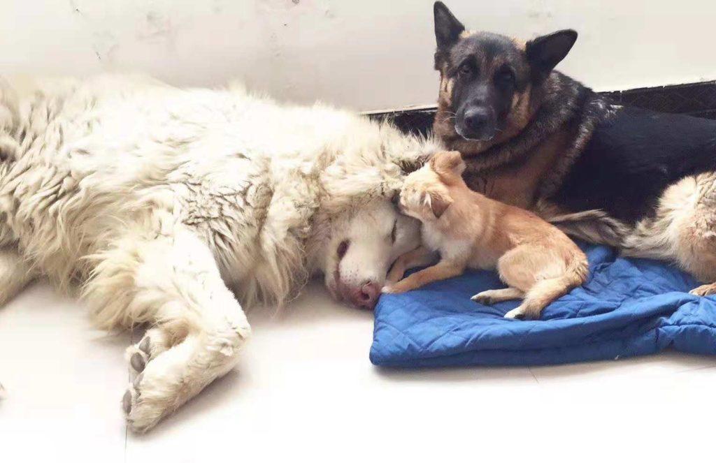 dog adoptions USA