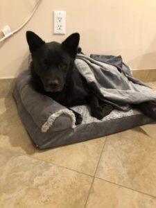 Dog Adoptions