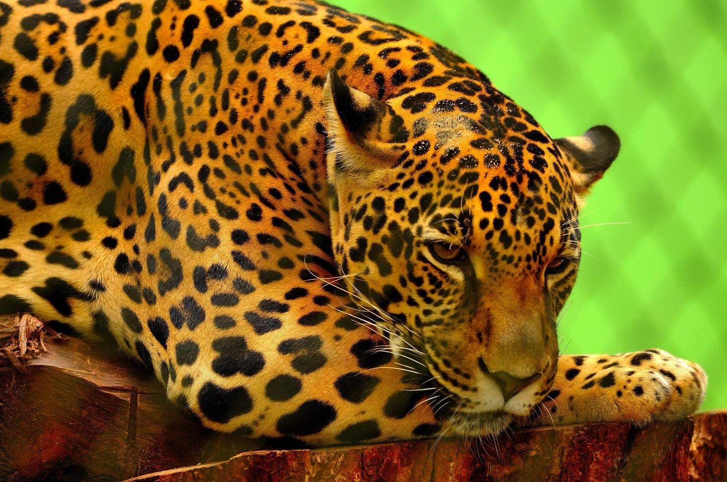 AES México anuncia iniciativa para conservación del jaguar y otros felinos en la Sierra de Tamaulipas