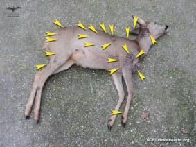 Reh von Hund angegriffen und schwer verletzt | Foto: NOE-Umweltwacht.org