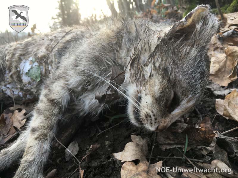 Bizarr - tiefgefroren: Katze und Fleisch im Natura 2000-Schutzgebiet illegal entsorgt