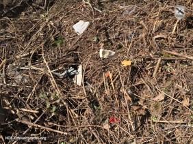 illegale Ablagerung im Landschaftsschutzgebiet Donau-March-Thaya-Auen in Hainburg | Foto: NOE-Umweltwacht.org