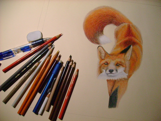 Drawing a Fox with Prismacolor Colored Pencils