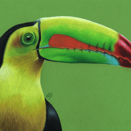 toucan, toucans, keel-billed toucan, keel billed toucan, green, yellow, black, face, close-up, close up, profile, side view, bird, birds, colored pencil, colored pencils, coloured pencil, coloured pencils, pencil crayon, pencil crayons, realism, realistic, animal, animals, wildlife, nature, noelle, noelle brooks, noellebrooks, noelle m brooks, noellembrooks, art, series, drawing, drawings, picture, pictures, illustration, illustrations, portrait