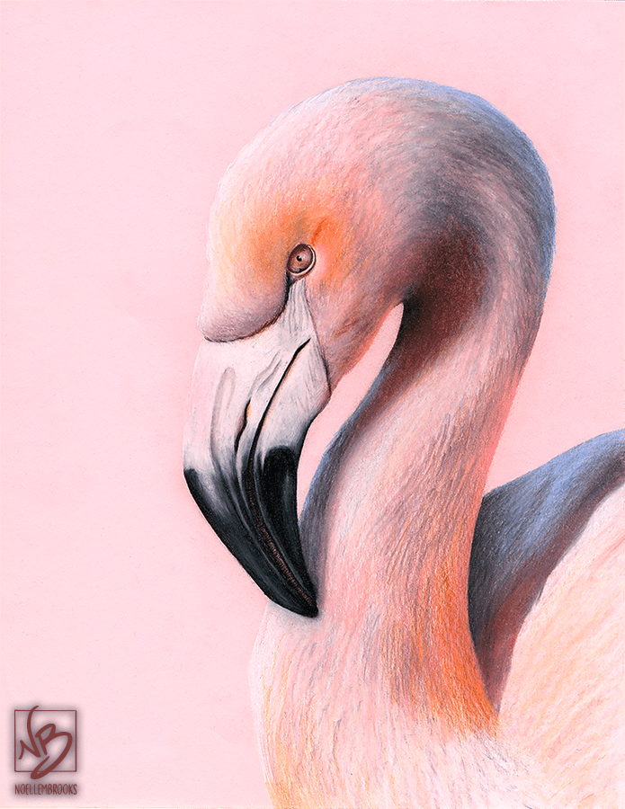 chilean flamingo, flamingo, flamingos, pink, face, close-up, close up, bird, birds, colored pencil, colored pencils, coloured pencil, coloured pencils, pencil crayon, pencil crayons, realism, realistic, animal, animals, wildlife, nature, noelle, noelle brooks, noellebrooks, noelle m brooks, noellembrooks, art, series, drawing, drawings, picture, pictures, illustration, illustrations, portrait,