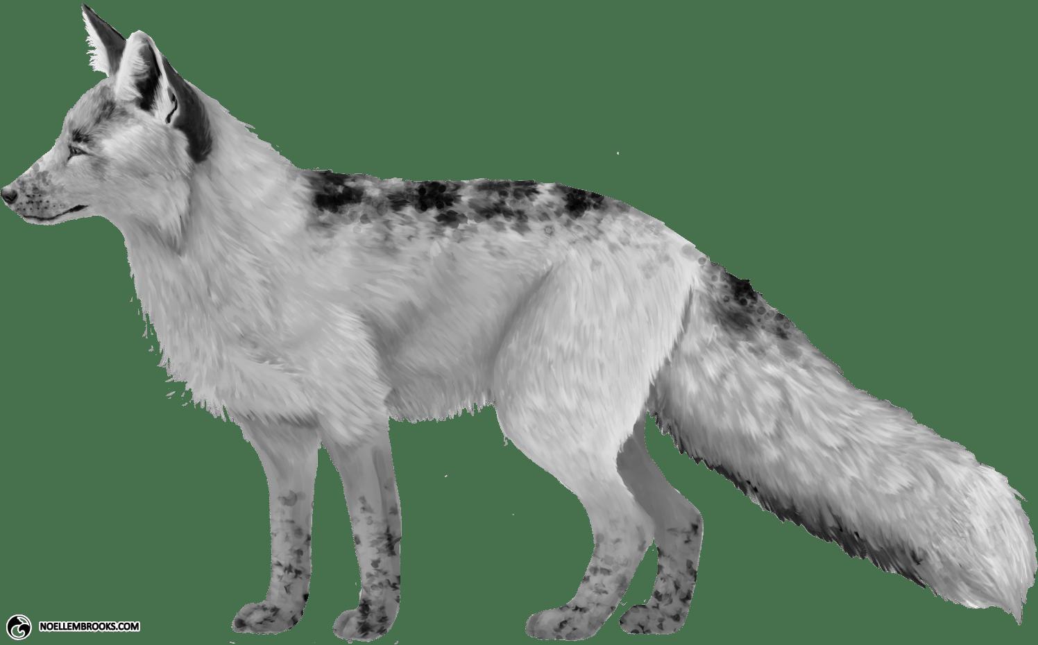 Georgian White-Colored Red Fox