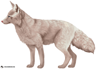Miko the Champagne-Colored Ranched Red Fox