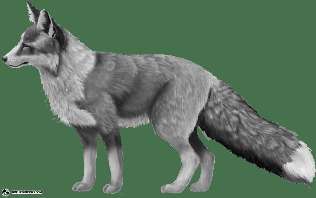 Platinum-Colored Red Fox