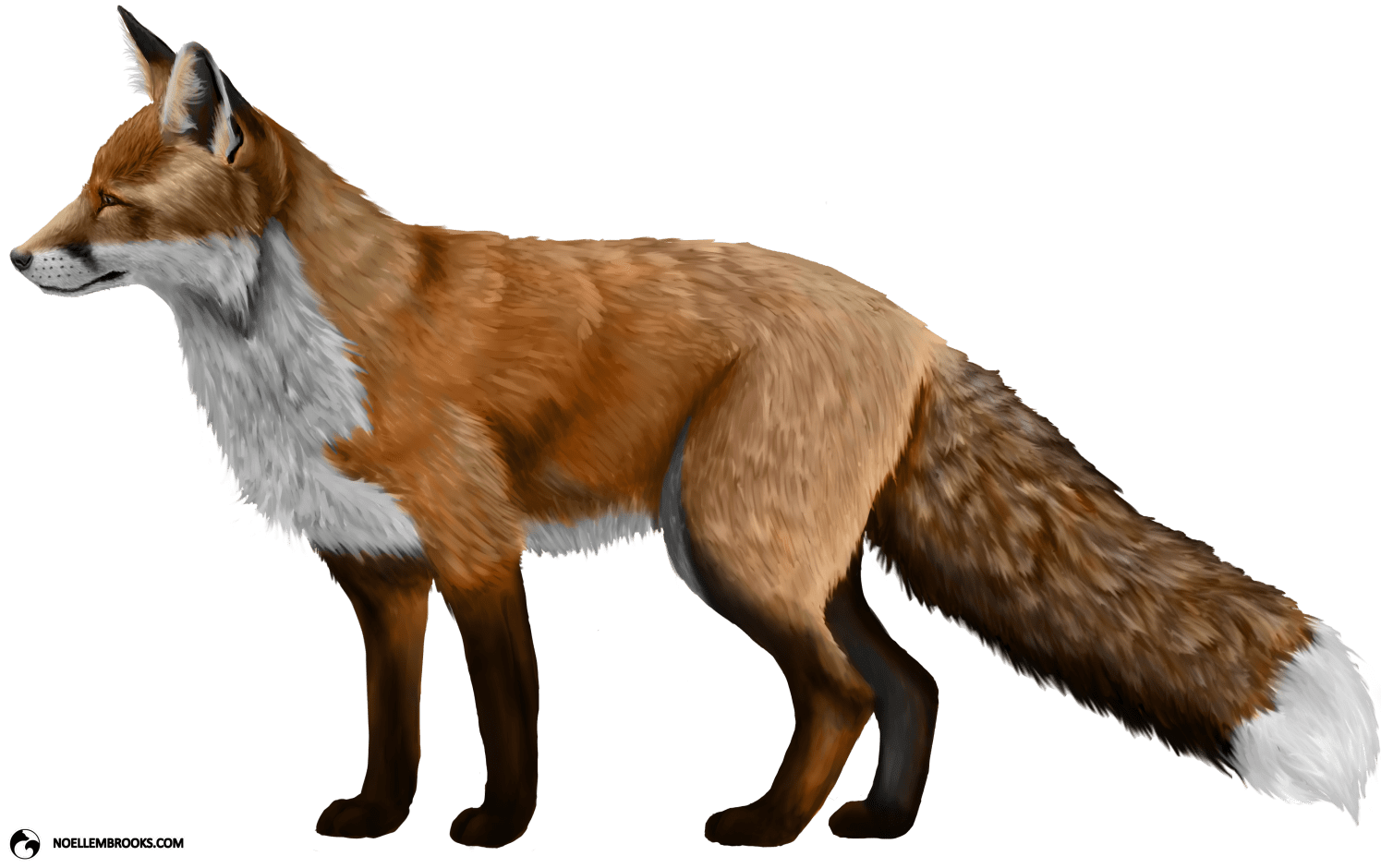 Red-Colored Red Fox