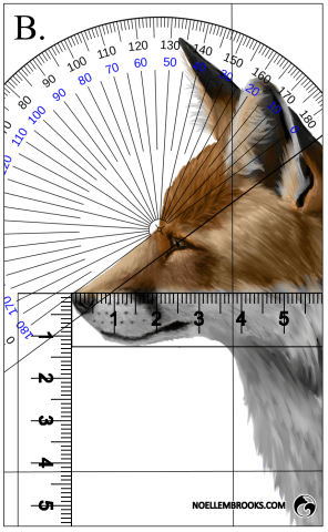 Red Fox Face Variation Calculations - B