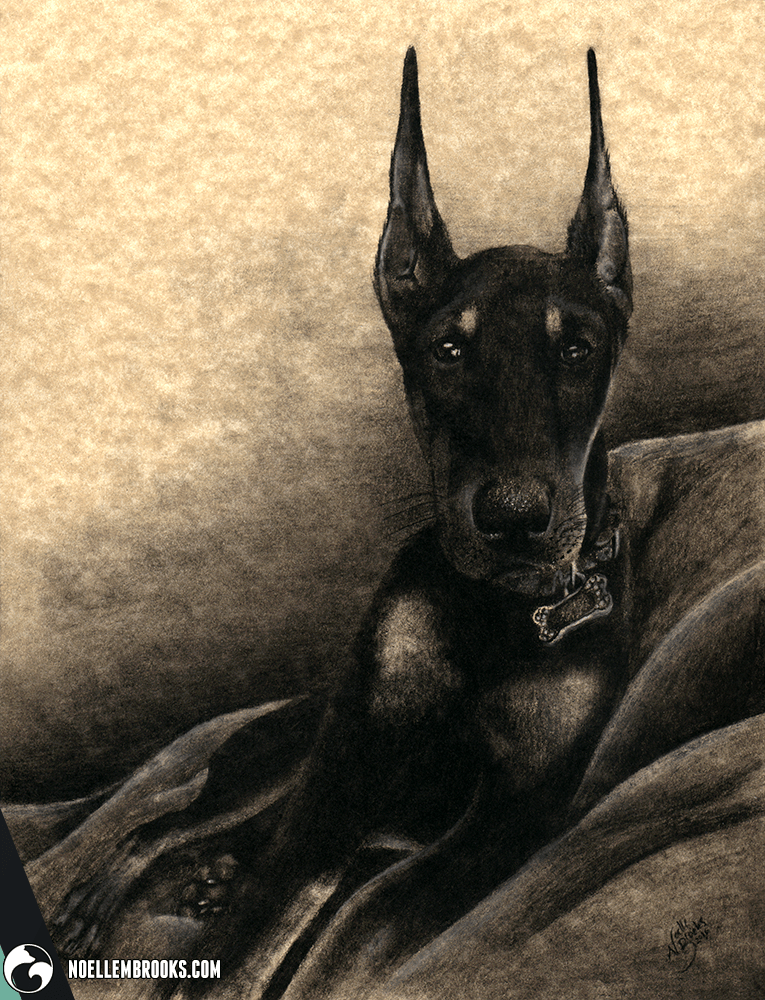 doberman, doberman pinscher, dog, dogs, lying down, short hair, short-hair, short haired, short-haired, charcoal, charcoals, charcoal pencil, charcoal pencils, realism, realistic, gradient, animal, animals, pet, pets, cute, achromatic, black and white, black, white, grey, gray, cream, creme, beige, noelle, noelle brooks, noellebrooks, noelle m brooks, noellembrooks, art, series, drawing, drawings, illustration, illustrations, portrait, portraits, picture, pictures,