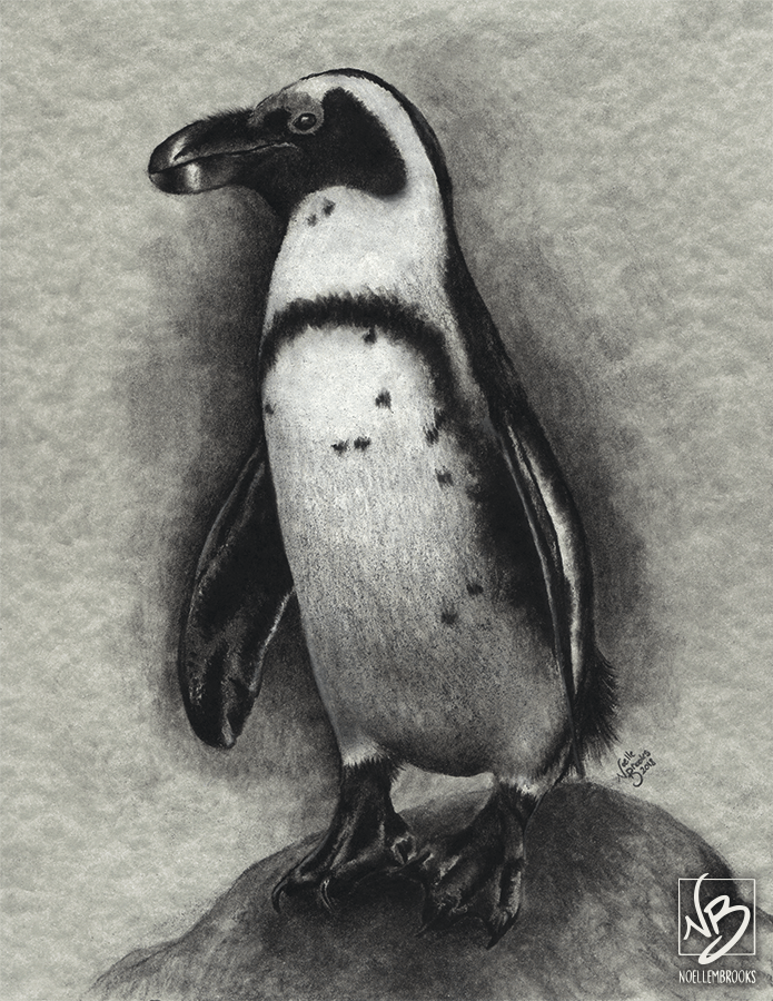 penguin, penguins, african penguin, african penguins, penguin standing, penguin standing on a rock, full-body, full body, small, bird, birds, charcoal, charcoals, charcoal pencil, charcoal pencils, realism, realistic, gradient, gradients, animal, animals, wildlife, nature, achromatic, black and white, black, white, grey, gray, cream, creme, beige, noelle, noelle brooks, noellebrooks, noelle m brooks, noellembrooks, art, series, drawing, drawings, picture, pictures, illustration, illustrations, portrait