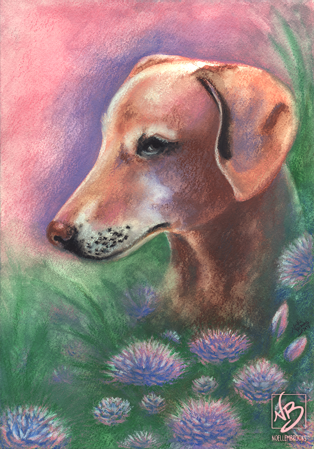 dog, dogs, pet, pets, puppy, dachsund, dachsunds, italian greyhound, italian greyhounds, greyhound, greyhounds, chihuahua, chihuahuas, mix, mutt, mutts, pastel, pastels, wax pastel, wax pastels, crayon, crayons, watercolor, watercolors, watercolour, watercolours, abstract, abstracted, abstraction, abstractions, realism, realistic, animal, animals, wildlife, nature, noelle, noelle brooks, noellebrooks, noelle m brooks, noellembrooks, series, drawings, pictures, portrait, portraits
